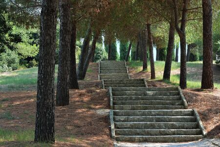 Staircase of stone steps in the shade of southern pine trees on the Red Island in Croatia, near the city of Rovinj.