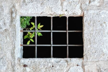 Window in a stone wall with a metal grill and a bush of greenery in the upper corner. From a series of windows of the world.