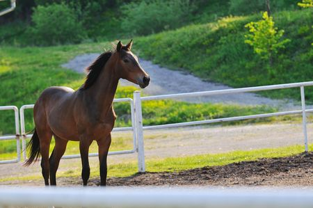 beautiful horse in nature run and have family relatinship photo