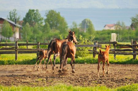 beautiful horse in nature run and have family relatinship Stock Photo - 5267678