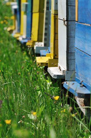 bee home at meadow with flowers and fresh green grass on spring season photo