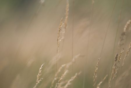 wind in the grass   (NIKON D80; 23.6.2007; 1320 at f6.3; ISO 100; white balance: Auto; focal length: 500 mm) photo