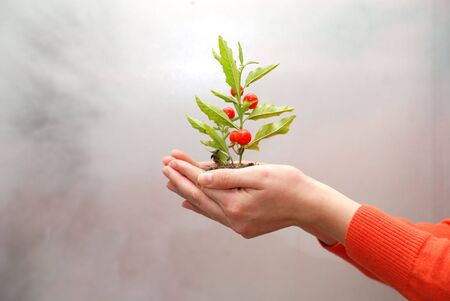 growth concept with small plant in hand photo