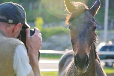 man taking photographs of the horse farm animal photo