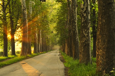 太陽の光線と劇的な光と美しい新鮮な朝 写真素材