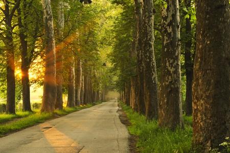 sentier: beau matin frais avec les rayons du soleil et la lumi�re dramatique  Banque d'images