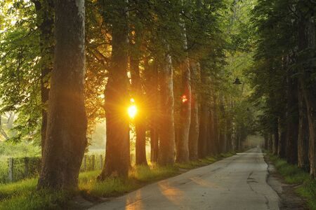 dews: beautiful fresh morning with sun rays and dramatic light Stock Photo