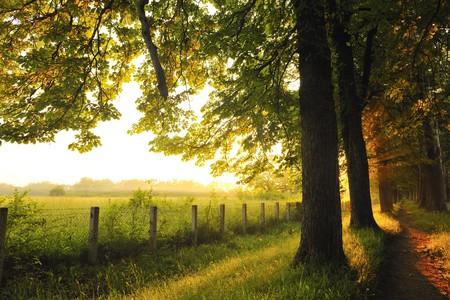 아침: 태양 광선 및 극적인 빛과 아름 다운 신선한 아침