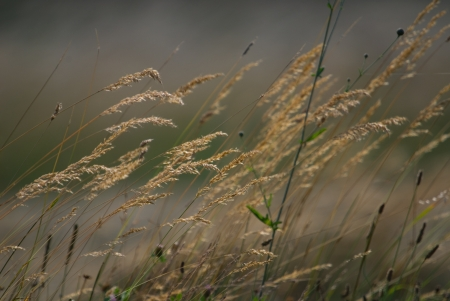 wind in the grass  photo