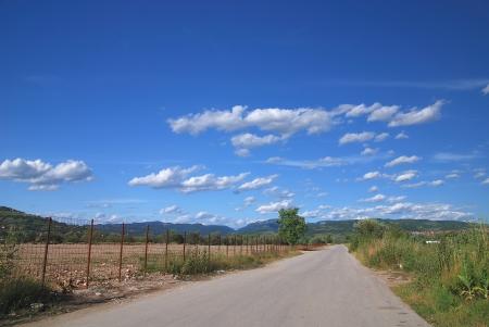 landscape at the summer season photo
