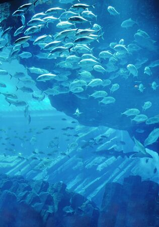 blue background ocean underwater aquarium with fishes and reef Stock Photo - 13106633