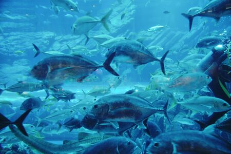 blue background ocean underwater aquarium with fishes and reef photo