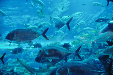 blue background ocean underwater aquarium with fishes and reef Stock Photo - 13106636