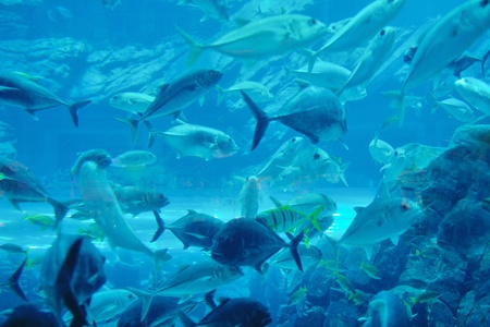blue background ocean underwater aquarium with fishes and reef Stock Photo - 13106632