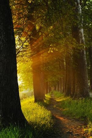 beautiful fresh morning with sun rays and dramatic light photo