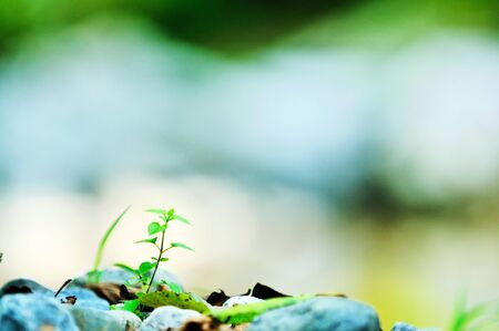 new growth concept with young  green leaf tree in nature background photo