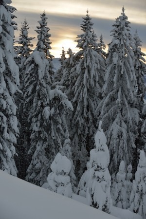 nature mountaint winter landscape with tree and fresh snow photo
