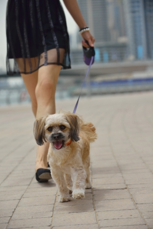 beautiful happy young  woman in black dress with cute small dog puppy have fun on street Stok Fotoğraf - 22705536