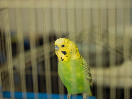green bird pet animal in cage photo