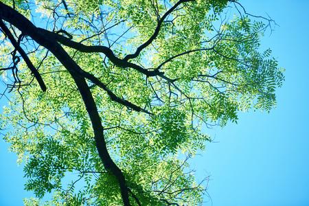 groene boom brances frame hoek met blauwe lucht en zon flare op achtergrond