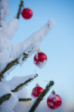brigth: christmas red balls  on pine tree covered with fresh snow Stock Photo