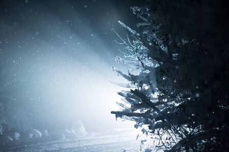 covered in snow: tree covered with fresh snow at winter night, back light with lens flare Stock Photo