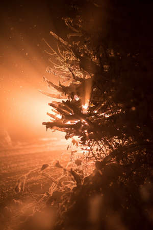 beauty in nature: tree covered with fresh snow at winter night, back light with lens flare Stock Photo