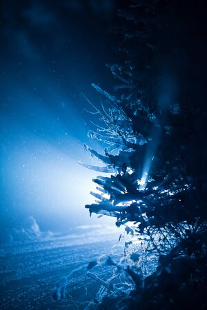 snow forest: tree covered with fresh snow at winter night, back light with lens flare Stock Photo