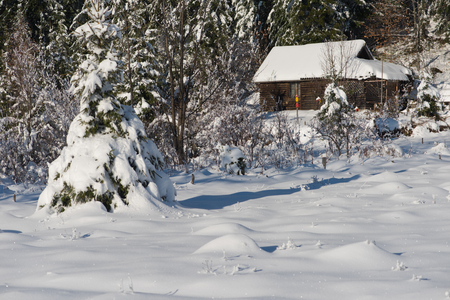 logs: mountain house near pine tree forest, small cabin covered with fresh snow in wild nature at sunny winter day
