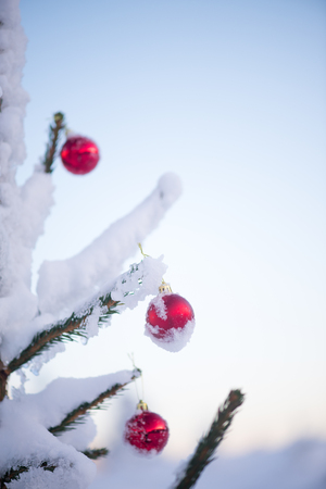 brigth: christmas red balls  on pine tree covered with fresh snow on beautful winter day sunset