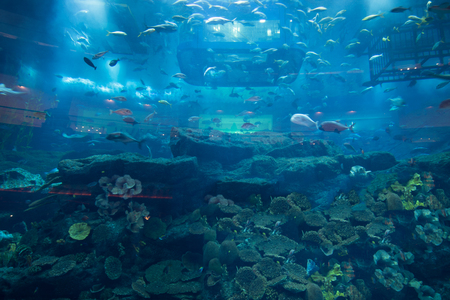 hard coral: different kinds of fish in the large aquarium Stock Photo