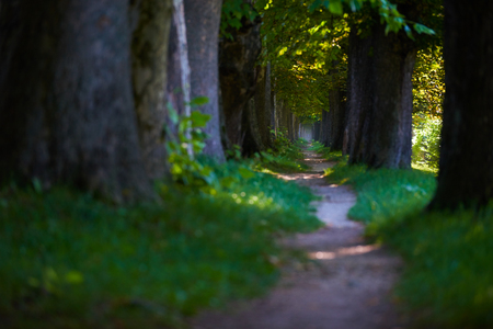 country road trought tree  alley in the park fresh  morning at spring nature landscape Stock Photo
