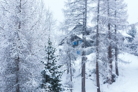 Winter landscape with Village house hidden behind the trees and covered with snow. 写真素材
