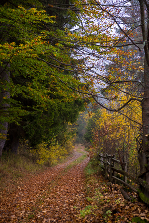 Country road through the autumnal forest on a foggy morning