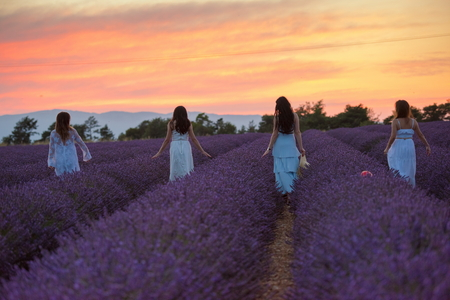 A group of females have fun in lavender flower field on beautiful sunset Banque d'images