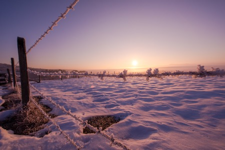 Winter landscape scenic   fresh snow  against purple violet  sky with long shadows on beautiful fresh morning