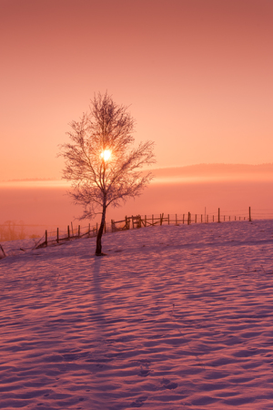 Winter landscape scenic  with lonely tree and fresh snow  against purple violet  sky with long shadows on beautiful fresh morning 스톡 콘텐츠 - 113938890