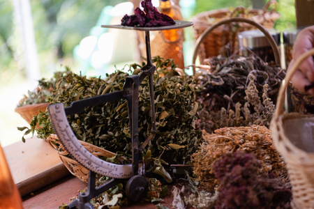 Herbalist gardener small business owner picking gathering fresh herbs for alternative medicine tea and putting on balance
