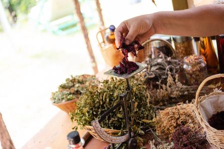 Jardinier herboriste propriétaire d'une petite entreprise cueillette d'herbes fraîches pour le thé de médecine alternative et mise en équilibre Banque d'images