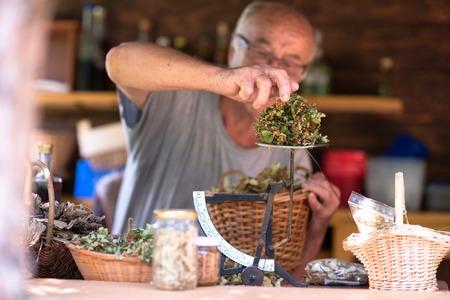 Senior man gardener herbalist picking gathering fresh herbs for alternative medicine tea and putting on balance