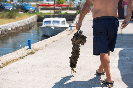 Closeup picture of senior man carries a bag of fresh mussels Stock fotó - 120260263