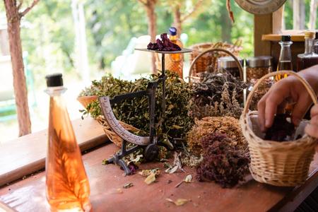 Herbalist gardener  small business owner picking gathering fresh herbs