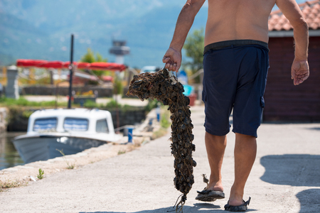 closeup picture of senior man carries a bag of fresh mussels Stock fotó - 120260183