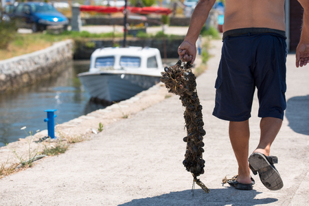 Closeup picture of senior man carries a bag of fresh mussels Stock fotó - 120260041