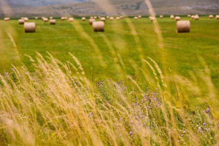 Rolls of hay in a wide field
