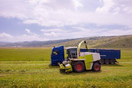 Erntezeit - Mähdrescher, der das geerntete Getreide in den Bunker des LKW lädt