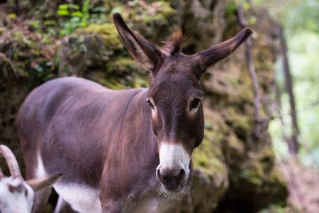 portrait of Donkey in the woods