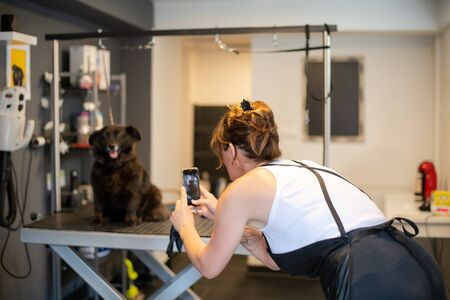 professional pet hairdresser hipster woman with tattoos using a mobile phone while taking pictures of cute black dog in beauty salon for animals
