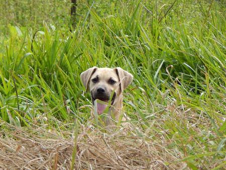 Country Dog Stock fotó