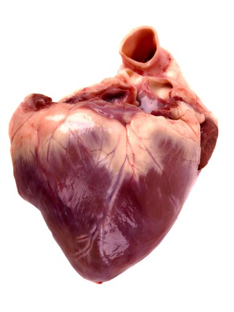 pig heart. Close up on white background photo